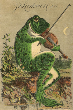 frog with fiddle